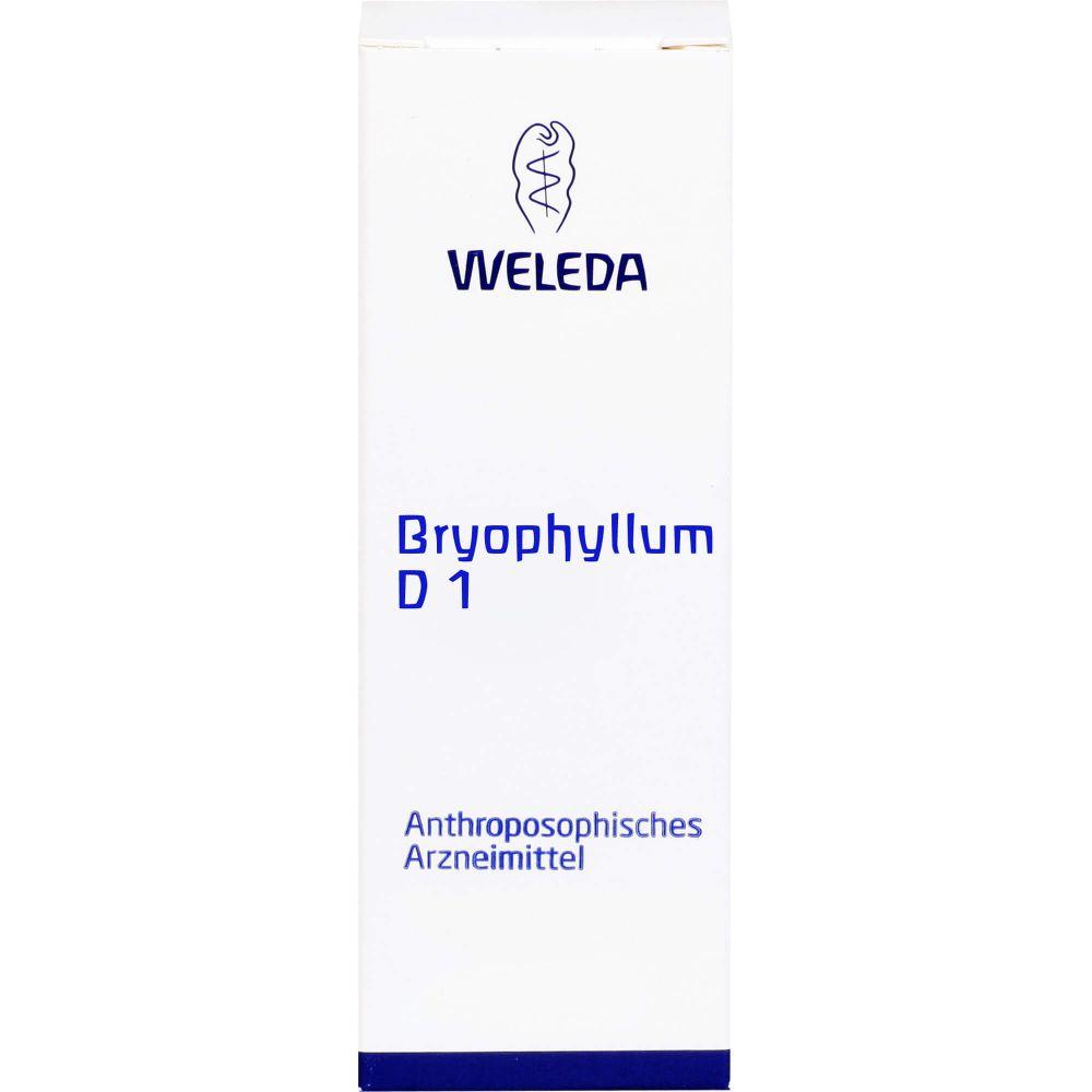 BRYOPHYLLUM D 1 Dilution