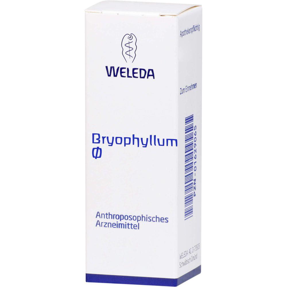 BRYOPHYLLUM Urtinktur