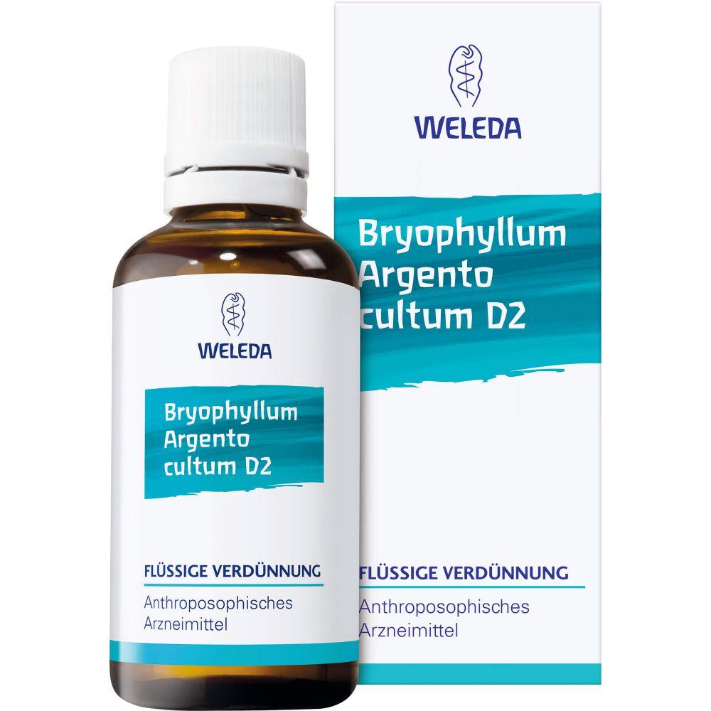 BRYOPHYLLUM ARGENTO cultum Rh D 3 Dilution