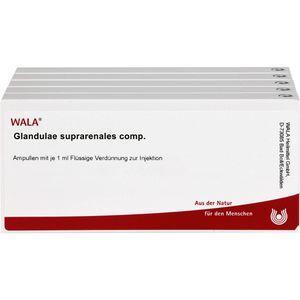 GLANDULAE SUPRARENALES comp.Ampullen